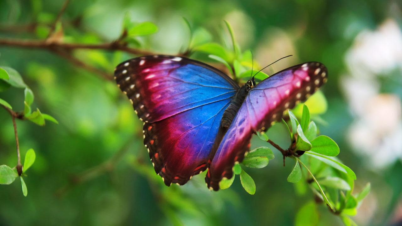 n219.promo-butterfly